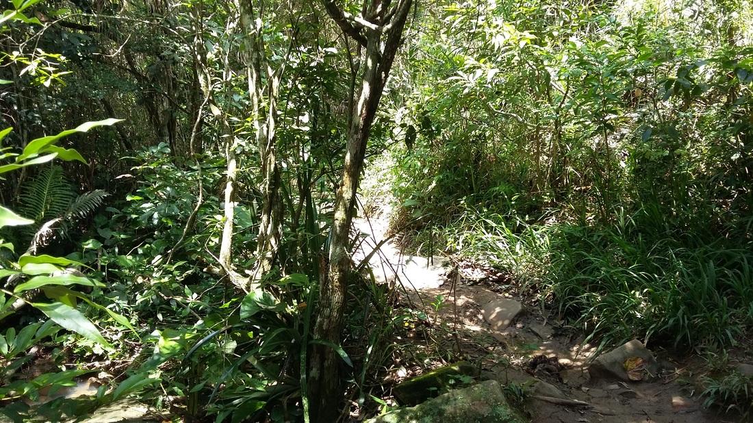 Trail that Shyrwyn walked barefoot in Florianópolis, Brazil